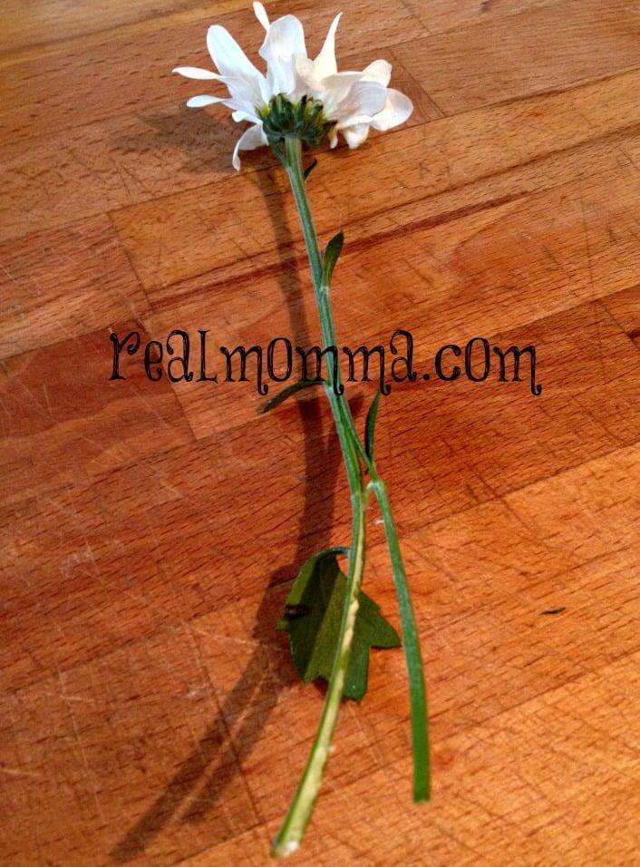 Split the stem color a flower