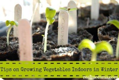 Tips on Growing Vegetables Indoors in Winter
