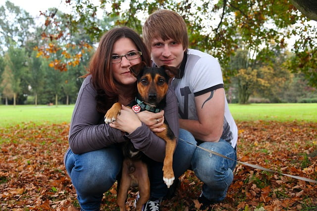 The Best Pets for your Family -Dogs