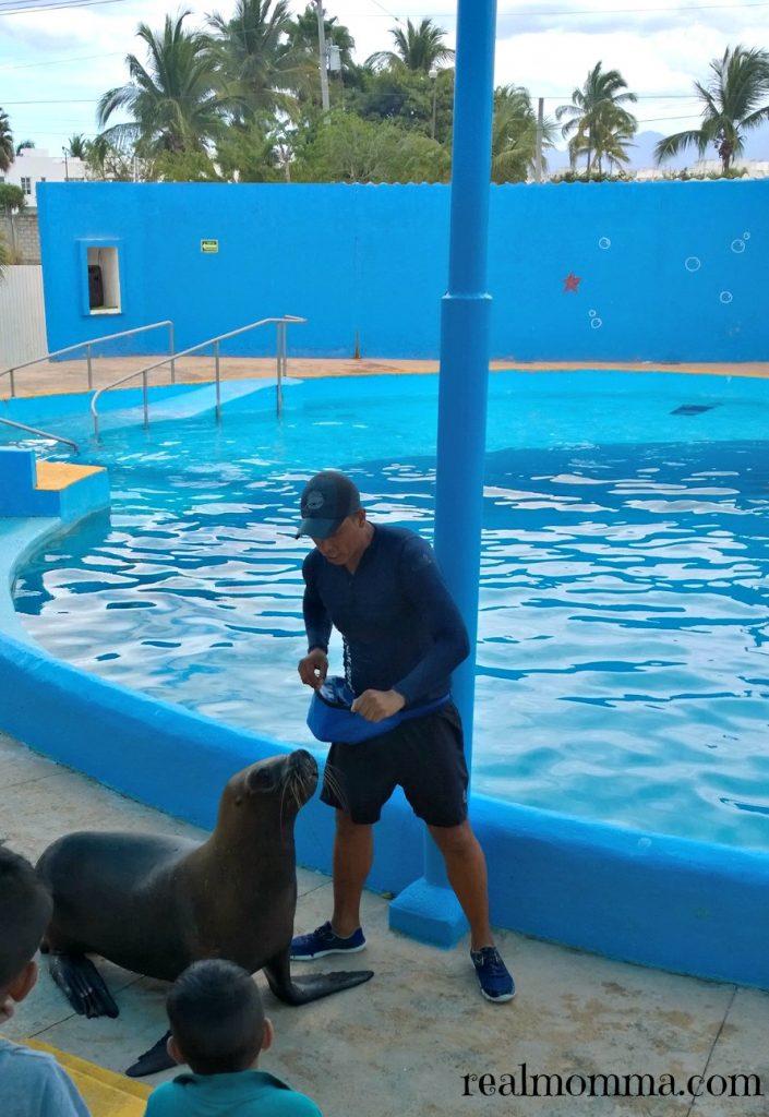 Sea Lions at Aquaventuras Park
