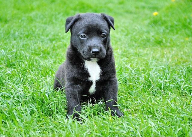 Adapt Your Home for Your New Dog with These Tips