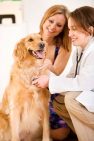 How Does Dogtor Online Work