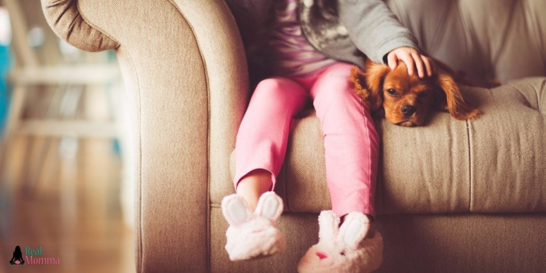 First Family Dog 4 Ways To Help Everyone Adjust Smoothly