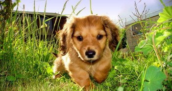 The Essential Guide To Training A New Puppy