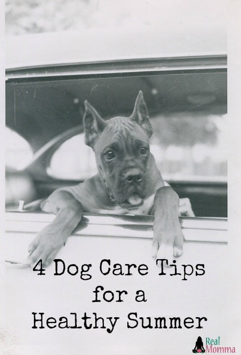 4 Dog Care Tips for a Healthy Summer