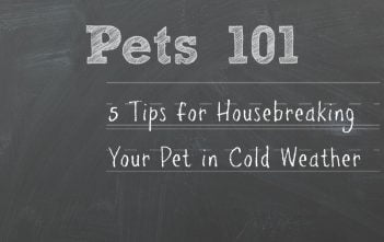 5 Tips for Housebreaking Your Pet during Cold Weather