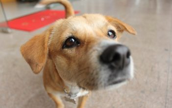 4 Questions To Ask Before You Get A Dog