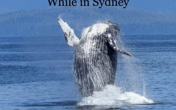 Top 5 Fun Activities for Kids While in Sydney