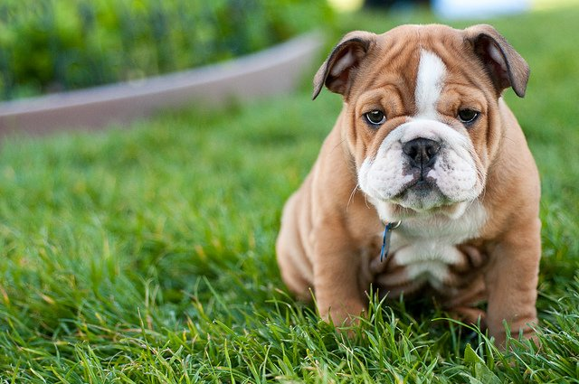Everything You Need To Know When You Buy A Puppy