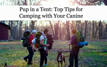 Pup in a Tent: Top Tips for Camping with Your Canine
