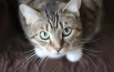 5 Tips For A Happy And Healthy Cat