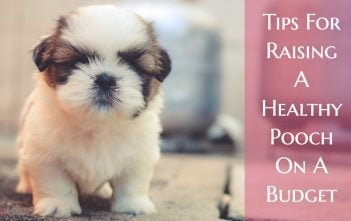 Tips For Raising A Healthy Pooch On A Budget