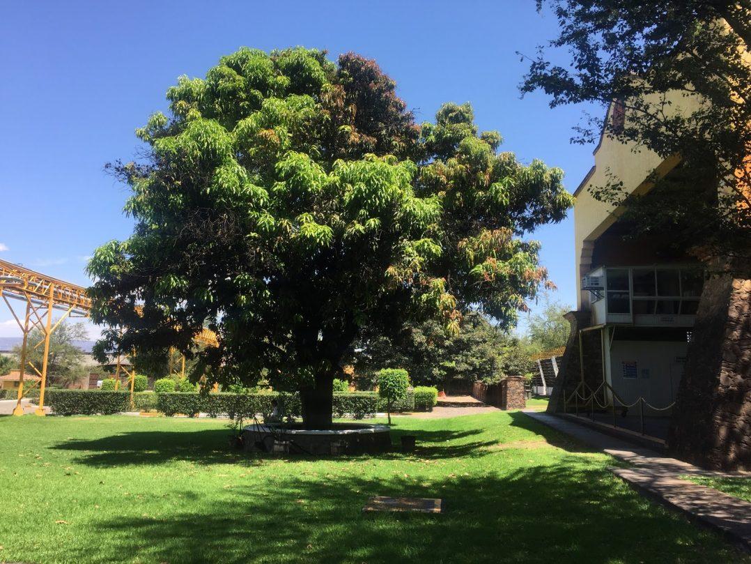 The grounds of Casa Herradura