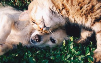 Staying On Top Of Routine Pet Care And Maintenance