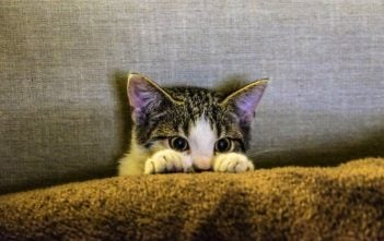 Moving your Family Cat To Your New Home