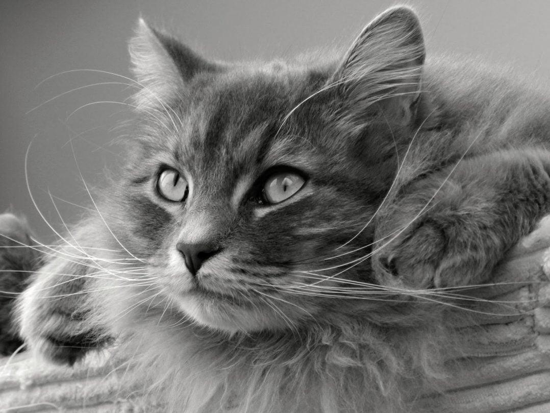 cat 1086330 1920