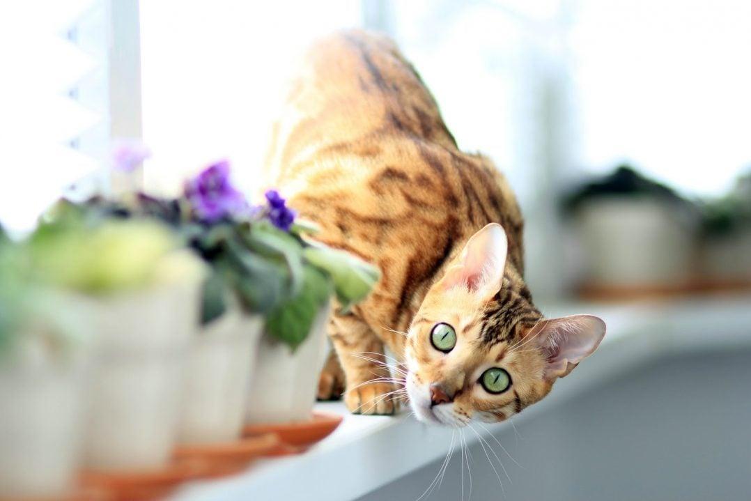 cat 877108 1920