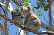 Incredible Nature and Wildlife in Australia
